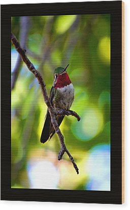 Ruby Throated Hummingbird Wood Print by Susanne Still