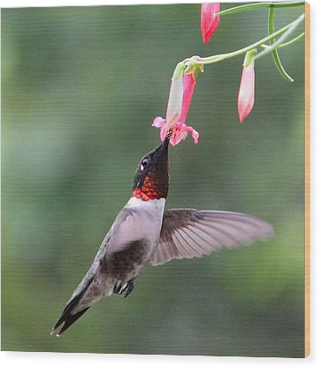Ruby Throated Hummingbird1 Wood Print