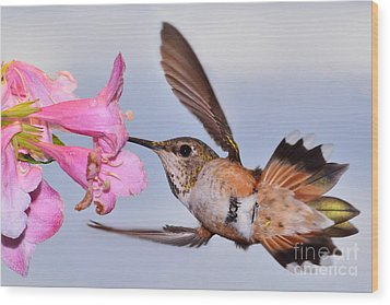 Wood Print featuring the photograph Rufous And Flowers by Jack Moskovita