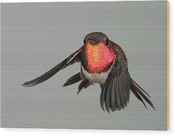 Wood Print featuring the photograph Rufous Hummingbird Downstroke by Gregory Scott
