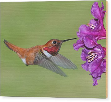 Wood Print featuring the photograph Rufous N Blooms by Jack Moskovita