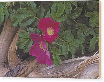 Rugosa Rose And Driftwood Wood Print