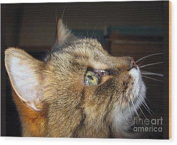 Wood Print featuring the photograph Runcius- The King Kitty by Ausra Huntington nee Paulauskaite