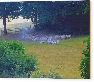 Running Of The Sheep Wood Print