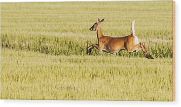 Running The Field Wood Print by Don Durfee