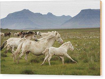 Running Wild In Iceland Wood Print by Gigja Einarsdottir