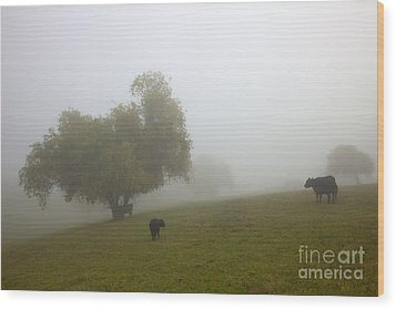Rural Fog Wood Print by Mike  Dawson
