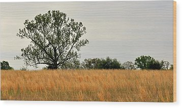 Rural Landscape Wood Print by Marty Koch