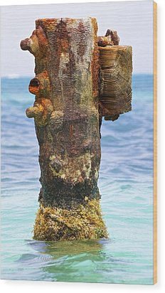 Rusted Dock Pier Of The Caribbean II Wood Print by David Letts