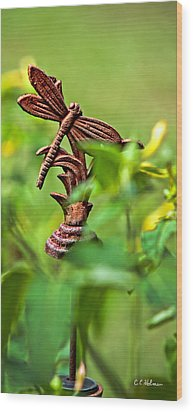 Rusty Dragonfly Wood Print by Christopher Holmes