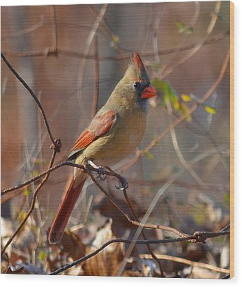 Wood Print featuring the photograph Rusty Wire Fence by Brian Stevens