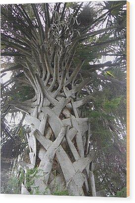 Sabal Palm Wood Print by Christy Usilton
