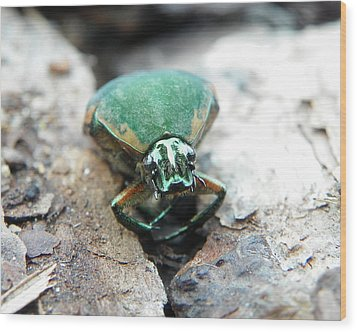 Wood Print featuring the photograph Sad June Bug by Chad and Stacey Hall