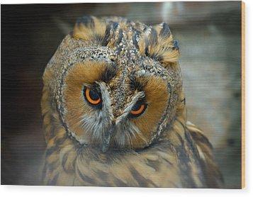 Sad Owl Wood Print