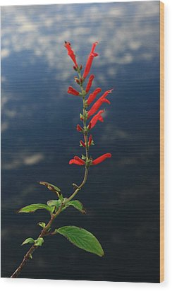 Sage Above Necanicum River Wood Print by Steven A Bash