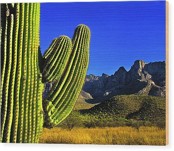 Saguaro And Catalina Mountains Wood Print by Jim Moore