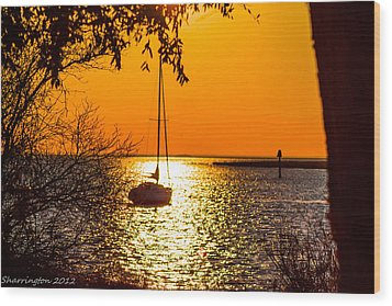 Wood Print featuring the photograph Sail Away by Shannon Harrington