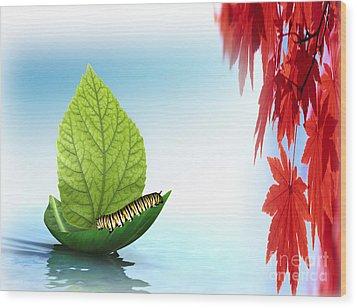 Sailing Alone Wood Print by Belinda Threeths