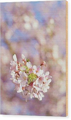 Sakura, Pink Cherry Blossom Tree Wood Print by Bonita Cooke