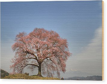 Wood Print featuring the photograph Sakura Sakura 2 by Tad Kanazaki