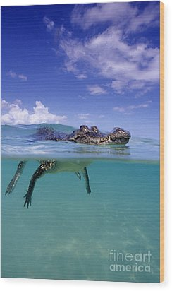 Salt Water Crocodile Wood Print by Franco Banfi and Photo Researchers