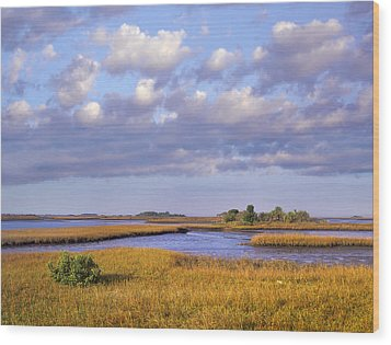 Saltwater Marshes At Cedar Key Florida Wood Print by Tim Fitzharris