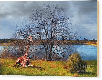 Sanctuary . 7d12636 Wood Print by Wingsdomain Art and Photography