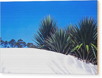 Sand Dune And Spanish Bayonet Wood Print by Thomas R Fletcher