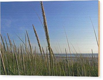 Sand Dune Grasses Wood Print by Pamela Patch