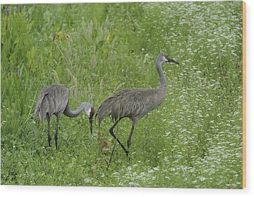 Wood Print featuring the photograph Sandhill Cranes And Chick by Bradford Martin
