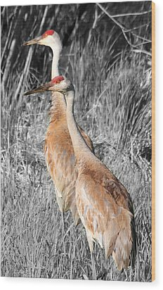 Sandhill Cranes In Select Color Wood Print