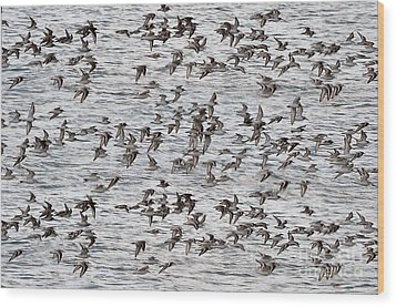 Wood Print featuring the photograph Sandpipers In Flight by Dan Friend
