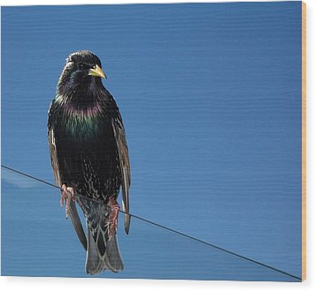 Wood Print featuring the photograph Santa Monica Pier Starling by Peter Mooyman