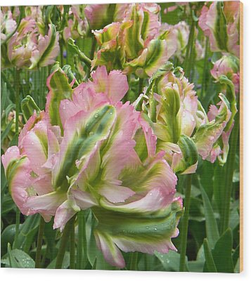 Sauvage Tulipes Wood Print