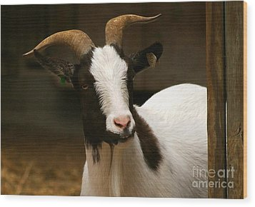 Wood Print featuring the photograph Say Cheese by Julie Clements