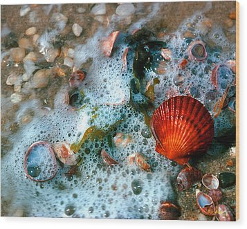 Wood Print featuring the photograph Scallop And Seaweed 11c by Gerry Gantt