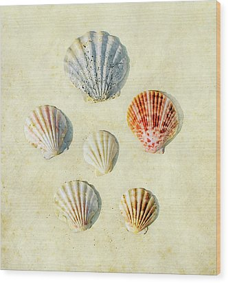 Scallop Shells Wood Print by Paul Grand Image