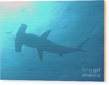 Scalloped Hammerhead Shark Wood Print by Sami Sarkis