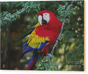 Wood Print featuring the photograph Scarlet Macaw - Guatemalan Rainforest by Craig Lovell