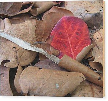 Scarlet Seagrape Leaf Still Life Wood Print