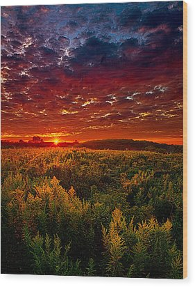 Scarlett Wood Print by Phil Koch