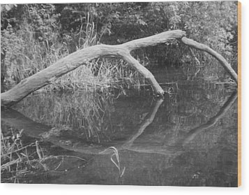 Scenes From The Kayak.   Downed Trees Of The Ec River Back Waters Part 2 Wood Print by Artist Orange