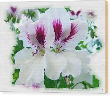 Scented Geraniums 2 Wood Print by Will Borden