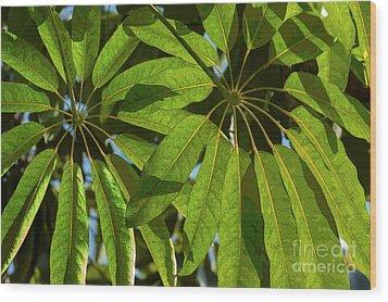 Schefflera Wood Print