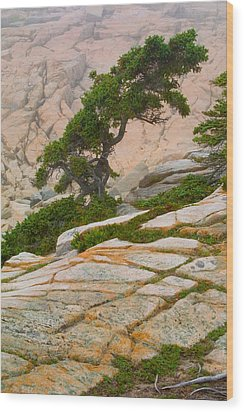 Schoodic Cliffs Wood Print by Brent L Ander