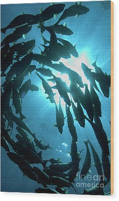 School Of Fishes Wood Print by Sami Sarkis