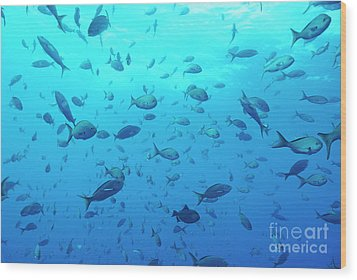 School Of Grunt Fish Wood Print by Sami Sarkis