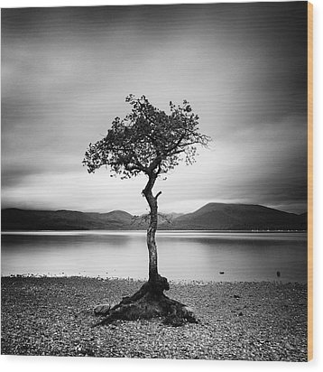 Scotland Milarrochy Tree Wood Print by Nina Papiorek