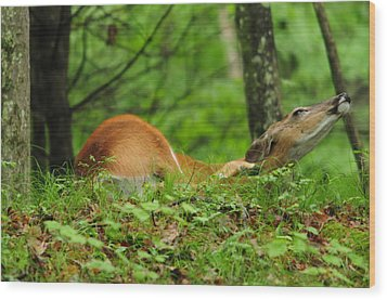 Wood Print featuring the photograph Scratching An Itch by Mike Martin