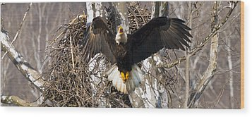 Wood Print featuring the photograph Screaming Eagle  by Randall Branham